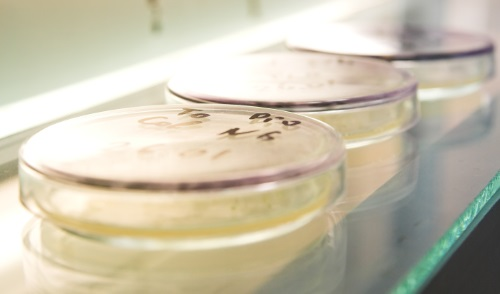 Pharmaceutical Products Microbial Testing