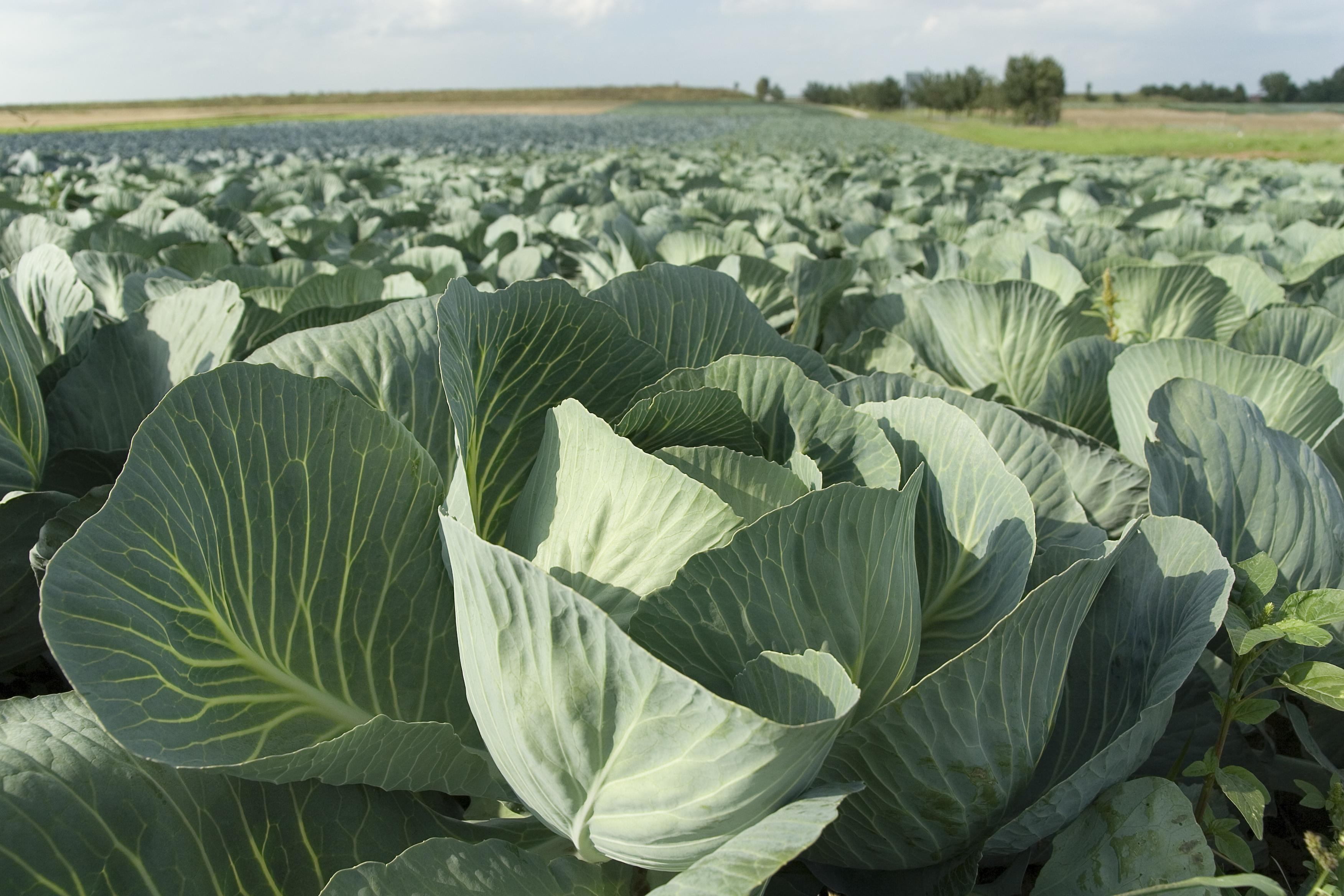 Tồn dư thuốc bảo vệ thực vật