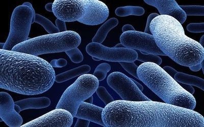 Water Testing for Legionella