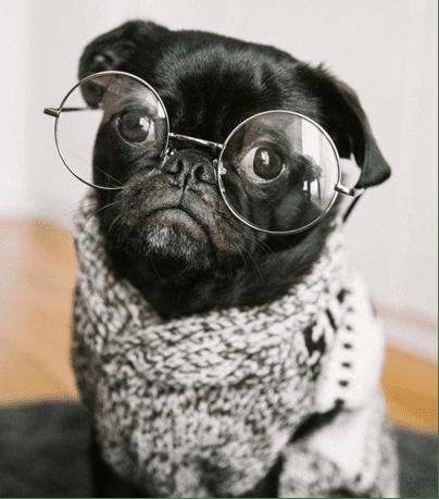 hipster-dog