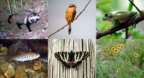 動物や植物の写真