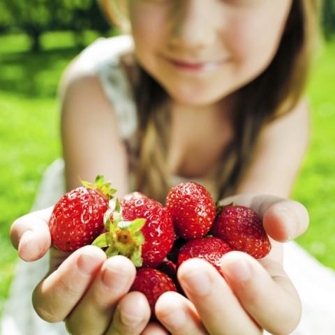 採摘無農藥殘留的有機草莓