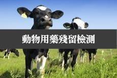 牛肉與牛奶皆為動物用藥殘留檢測重點之一。