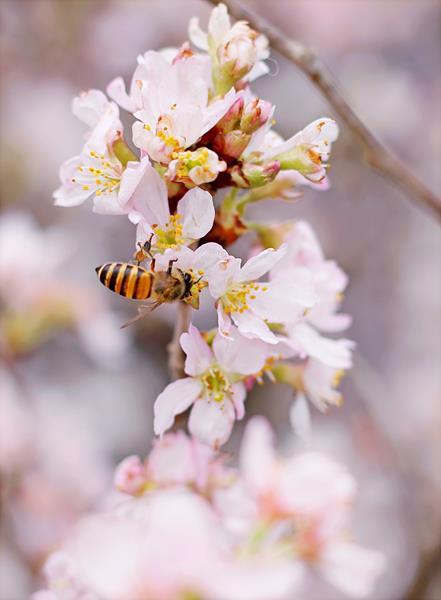 全球蜂箱存活率及蜜蜂生產的蜂蜜量不斷降低-然而全球蜂蜜產量卻逐年攀升