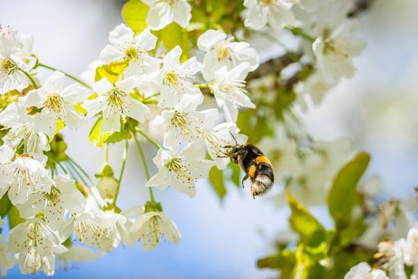 除了蜂蜜真實性檢測外,蜂蜜也須施作動物用藥殘留檢測。