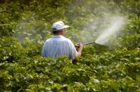 Man spraying vines