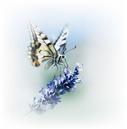 eas butterfly