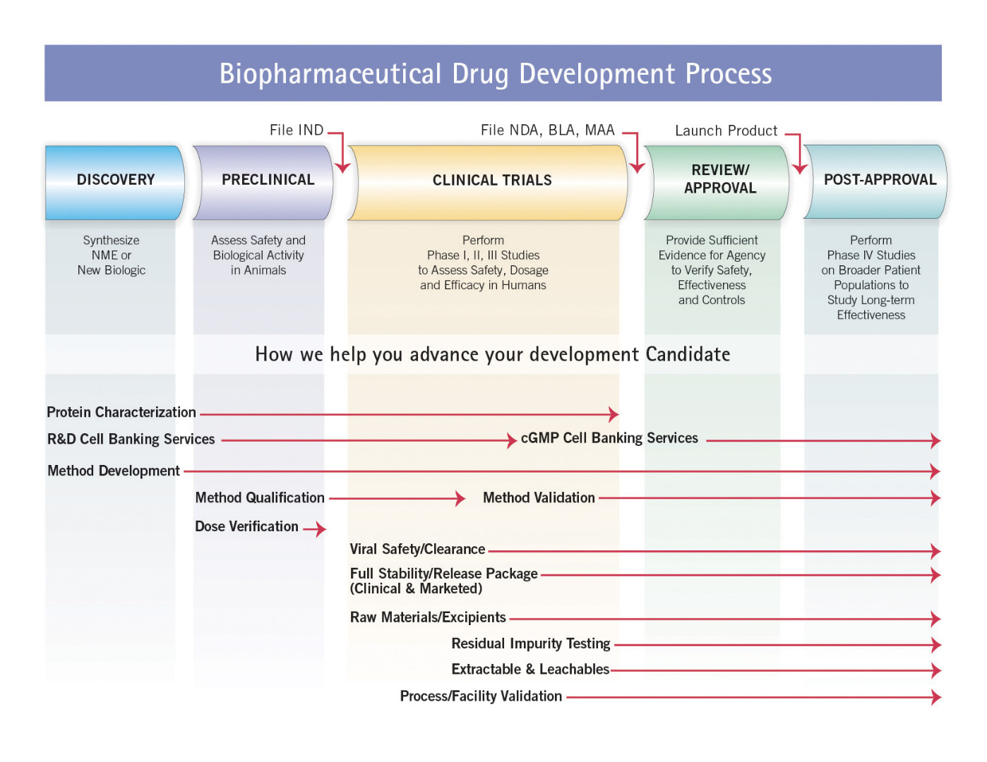 Biopharmaceutical Drug Development Process