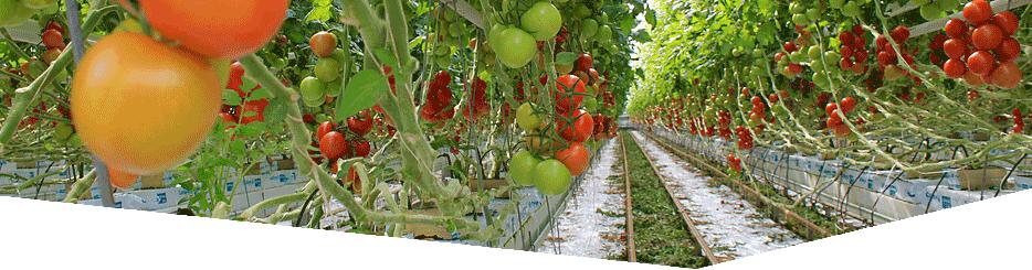 Crop Health