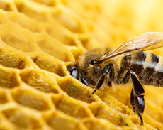 The Future of Bees, the Future of Life