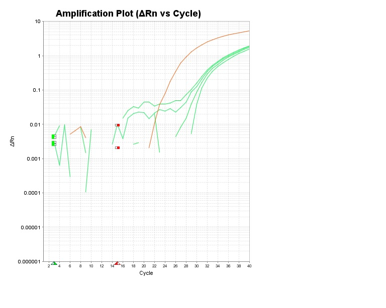Amplification Plot