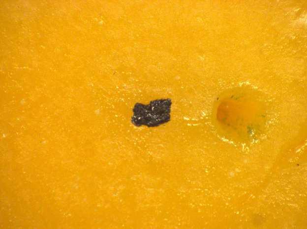Cheese Contaminate