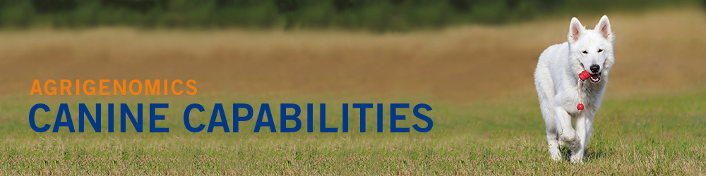 Agrigenomics: Canine Capabilities, white dog in a field image