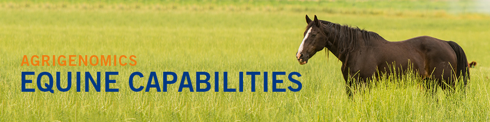 Equine Capabilities - horse in a green field