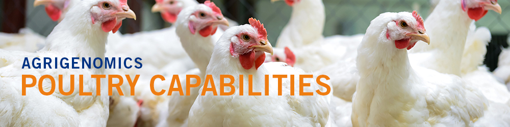 Poultry Capabilities - group of chickens