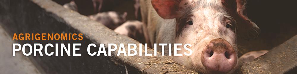 Porcine Capabilities - Pig photo