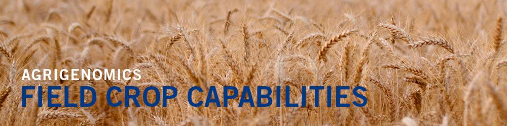 Field Crop Capabilities - Wheat field