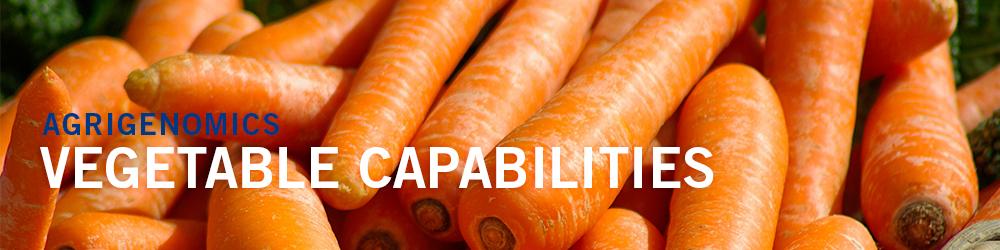 Vegetable Capabilities - basket of carrots