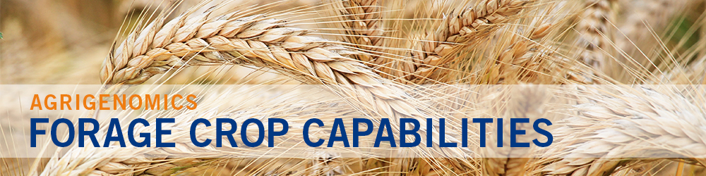 Forage Crop Capabilities - field of rye