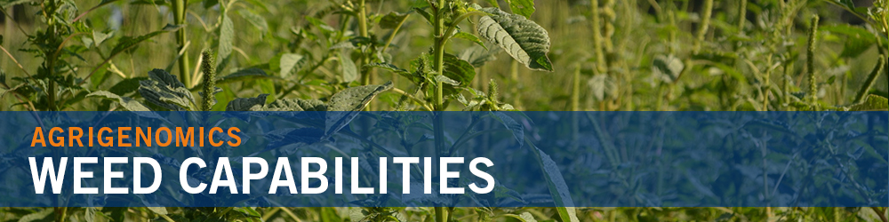 Weed Capabilities - palmer amaranth image