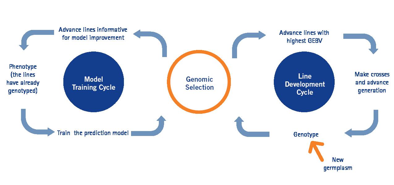 Genetic selection diagram