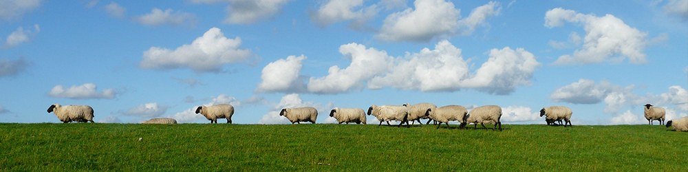 Sheep on a green hill