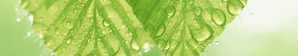 Moist green leaf