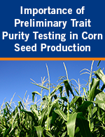 Importance of Preliminary Trait Purity Testing In Corn Seed Production