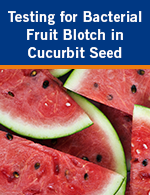 Testing for Bacterial Fruit Blotch in Cucurbit Seed