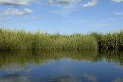 surface water.jpg