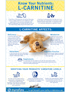 L-Carnitine Infographic