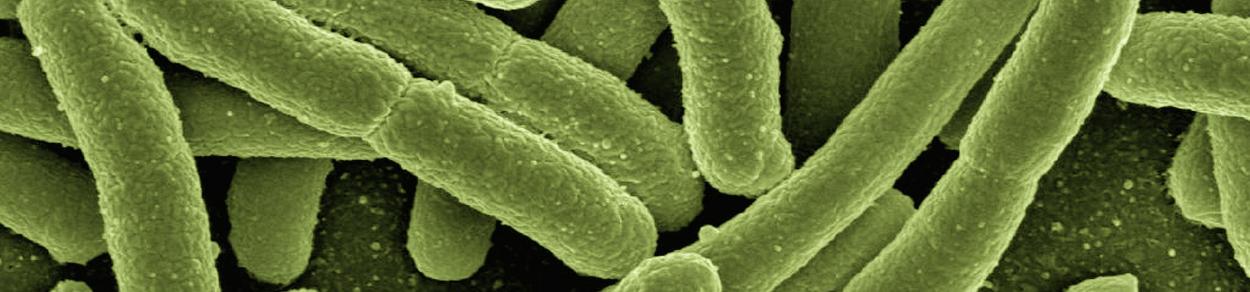 Eurofins BioDiagnostics Biologicals Single Species Identification