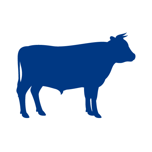 Bovine (Beef)