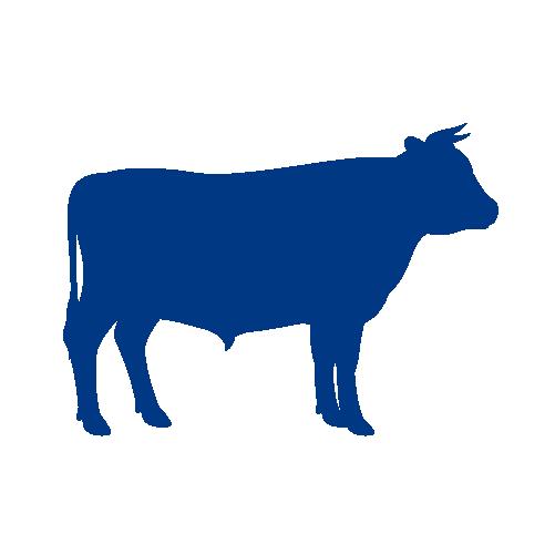 Bovine (Dairy)
