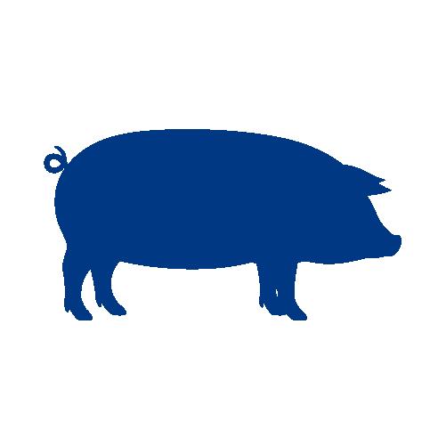 Porcine
