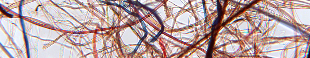 dust microscope