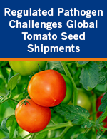 Regulated Pathogen Challenges Global Tomato Seed Shipments