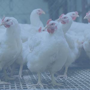 Meat, Poultry, & Seafood Testing Services - Eurofins USA - Eurofins USA