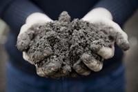 Gardeners Hands Holding Soil