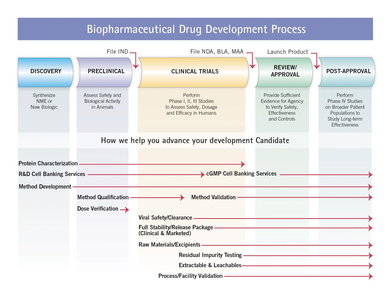 Biopharmaceutical Drug Development Process