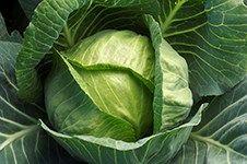 Analyse af frugt og grønt
