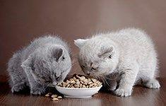 Analyse inden for området af petfood