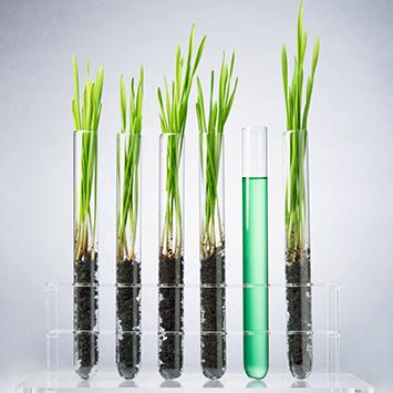 Genetisch veränderte Pflanzen