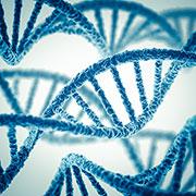 DNA - Mutagenese