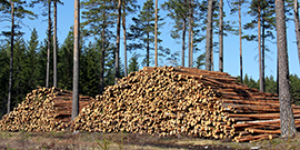 Analyser för skogsindustrin