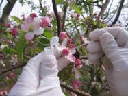 Növényvédelmi szolgáltatásaink