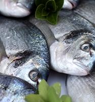 Fish_speciation