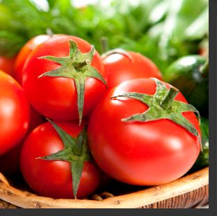 tomate ToBRFV Tobamovirus