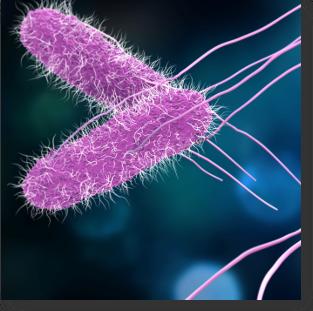Bactérie Salmonella