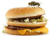 Fly burger